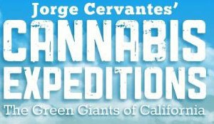The Green Giants of California – Cannabis Expeditions