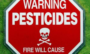 "84% of California's ""Medical Marijuana"" Contaminated with Pesticides"