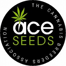 ace cannabis seeds marijuana