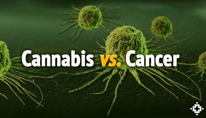 cannabis vs cancer cells