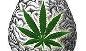 Study: Cannabis Can Attenuate Damage, Improve Memory Retention Following Stroke