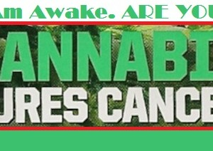 Cannabis Can Treat Various Cancers According to 61 Studies