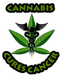 cannabis oil cures cancer