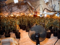 chinese cannabis factory