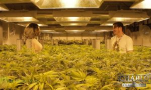 "Charlo Greene Visits A Denver ""Cannabis Factory"""