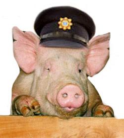 gardai pigs