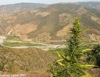 Morocco hashish Chefchaouen marijuana cannabis spain