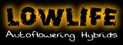 lowlife autoflowering cannabis seeds