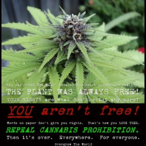 "The Fallacy of the ""Legalize and Tax Cannabis"" initiatives"