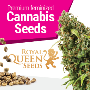 Royal Queen cannabis seedbank